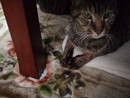 Mさんの猫12.jpg