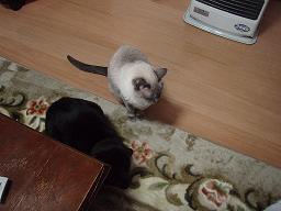 Mさんの猫13.jpg