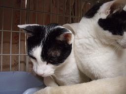 Mさんの猫2.jpg