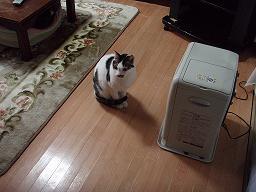 Mさんの猫3.jpg