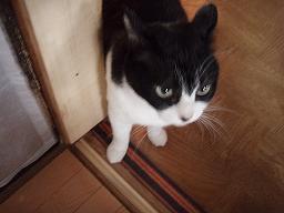 Mさんの猫6.jpg