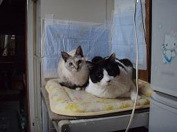 Mさんの猫8.jpg