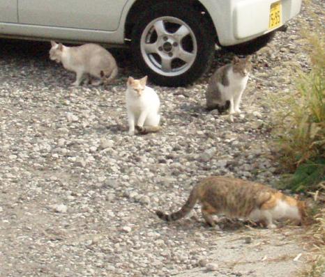 M地区の猫3.jpg