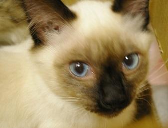 mhさんの保護猫.JPG