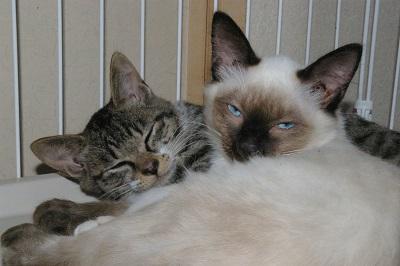 mhさんの保護猫4.JPG