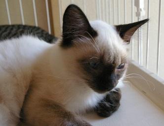 mhさんの保護猫5.JPG