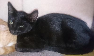 pimo(黒猫)2.jpg