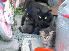 さくらちゃんと子猫.jpg