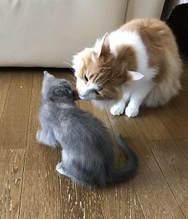 ウメコちゃんとニャン吉君.jpg