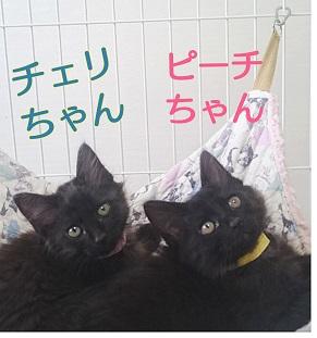 チェリとピーチ姉妹.jpg