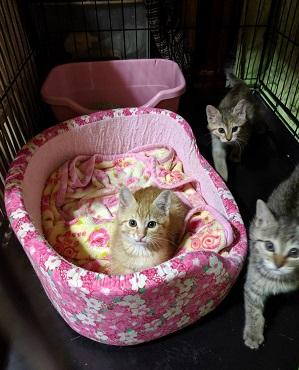 トラファルガーちゃんの所の保護猫たちJPG.JPG