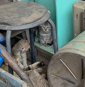 トラファルガー家の保護猫3匹.jpg