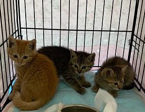 トラファルガー家の保護猫4.jpg