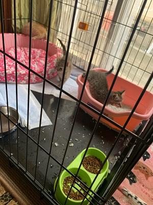トラファルガー家の保護猫5.jpg