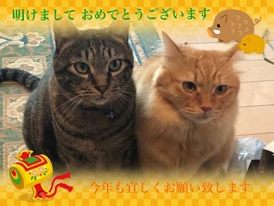 ミニョンとリッキーのお正月2019.jpg