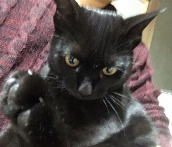 メスの黒猫.JPG