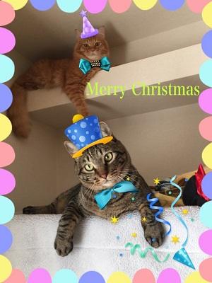 リッキー・ミニョンの2016年クリスマス.jpg