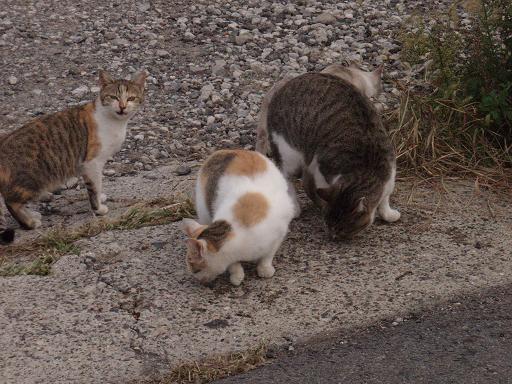 三輪の猫.jpg
