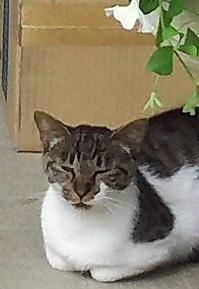 上山田の2匹の母猫.JPG
