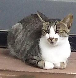 上山田の2匹母猫か?.JPG