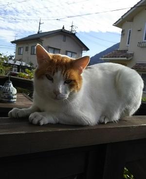 上山田のシロくん・オス・3~4歳.JPG