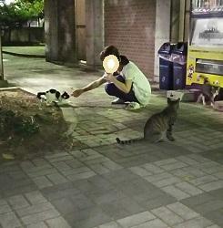 上山田の子猫達.JPG