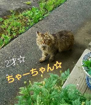 母猫.jpg