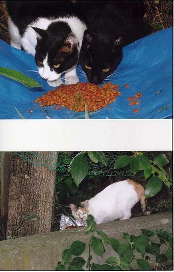 畑の猫.JPG