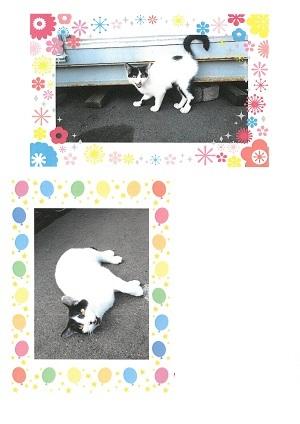 白黒ちゃんのチラシ2-.jpg