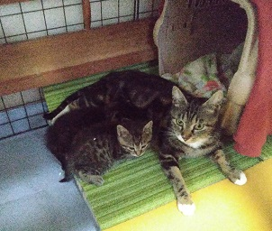 絹繭と母猫.jpg