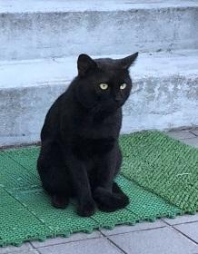 若里黒猫オス.jpg