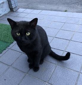 若里黒猫オス2.jpg