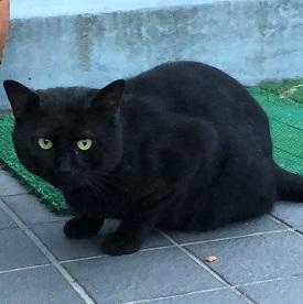 若里黒猫オス3.jpg