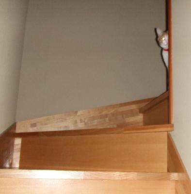 階段のきなこちゃん.JPG