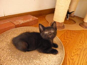 黒猫ナナ.jpg