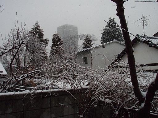 3月7日の雪.jpg