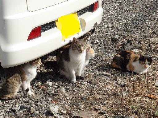 4匹のピアス猫.jpg