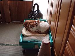 Mさんの猫11.jpg