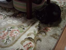 Mさんの猫4.jpg