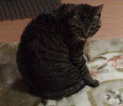 Mさんの猫5.jpg