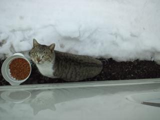 M地区の猫.jpg