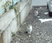 M地区の猫達.jpg
