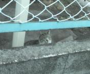 M地区の猫達1.jpg