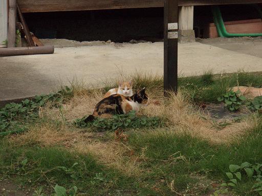 M地区の猫4.jpg