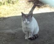 M地区猫3.jpg