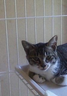mhさんの保護猫3.JPG